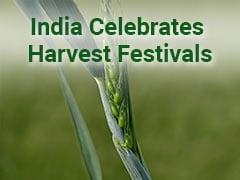 Pongal, Makar Sankranti, Lohri 2021: India Celebrates Harvest Festivals