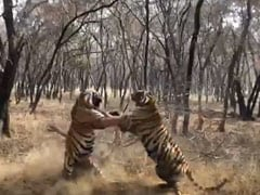 """Clash Of Titans, Only From India"": Forest Officer's Tiger Fight Video"