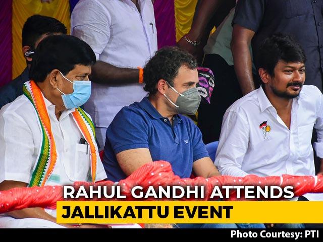 Video : Rahul Gandhi Slams Centre At Jallikattu Event In Poll-Bound Tamil Nadu