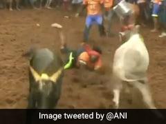 Watch: Bull-Taming Event Jallikattu Starts In Tamil Nadu Amid Pandemic