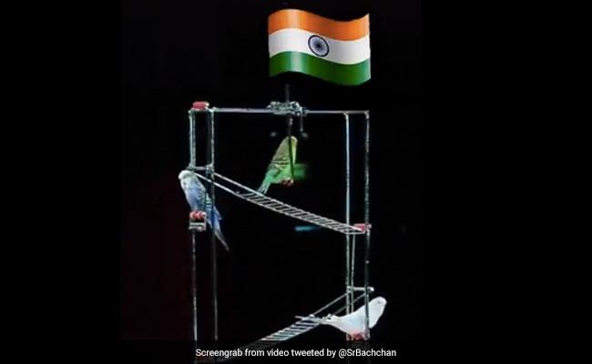 शख्स ने पक्षियों की मदद से यूं लहराया तिरंगा झंडा, अमिताभ बच्चन ने शेयर किया Video