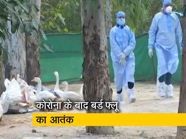 Videos : बर्ड फ्लू : दिल्ली के 8 सैंपल जांच में पॉजिटिव आए, संजय झील आम जनता के लिए बंद