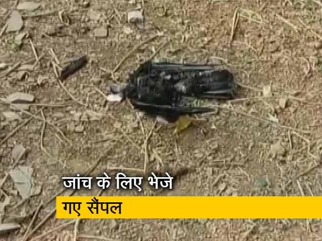 Videos : राजस्थान: झालावाड़ में 250 कौवों की मौत, बर्ड फ्लू की हुई पुष्टि
