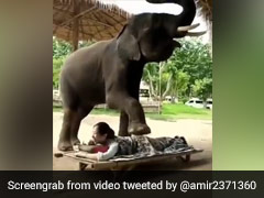 Viral Video Shows Elephant Massaging A Woman. Here's Why It's Problematic