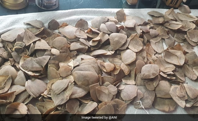 Man Arrested With Pangolin Scales In West Bengal