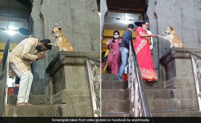 Dog Shakes Hands With Devotees Outside Temple In Adorable Video
