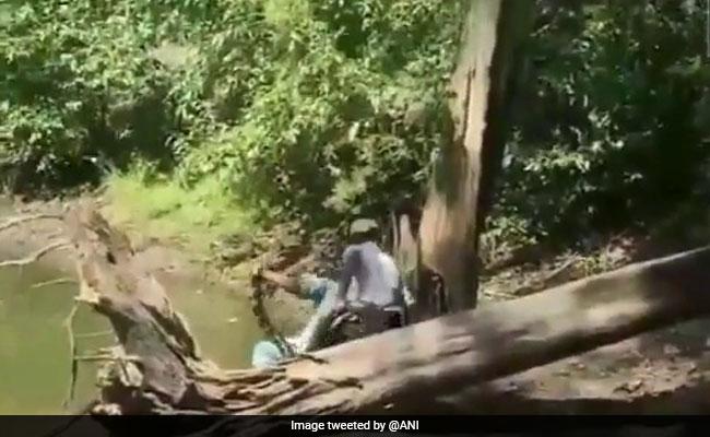 Video: Snake Catcher Narrowly Avoids Being Bitten By King Cobra In Karnataka