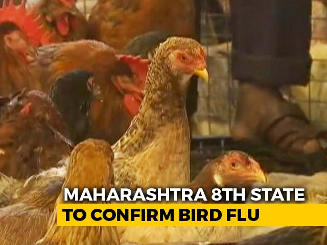Video : Maharashtra Becomes Eighth State To Confirm Bird Flu, 800 Chickens Dead