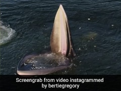 Eden's Whale Trap: Drone Footage Shows A Whale's Unique Feeding Strategy
