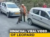Video : Viral Video Of Leopard 'Playing' With People Raises Concerns