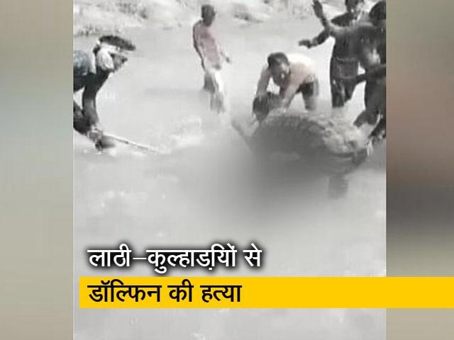 Video : देश-प्रदेश : यूपी के प्रतापगढ़ में लुप्तप्राय डॉल्फिन की युवकों ने पीट-पीट कर हत्या की