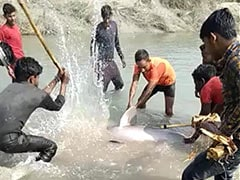 Gangetic Dolphin Beaten To Death In UP, 3 Arrested As Video Goes Viral