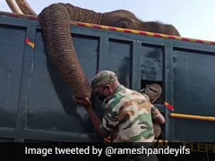 Tamil Nadu Forest Ranger's Tearful Goodbye To Elephant In Heart-Wrenching Video