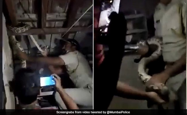 Mumbai Cop Removes 6-Foot Python From Dharavi Home. Watch