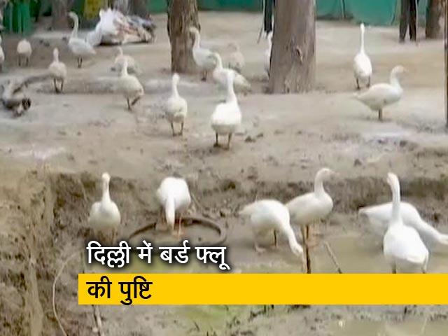 Videos : दिल्ली : संजय पार्क में सामने आया था बर्ड फ्लू का मामला