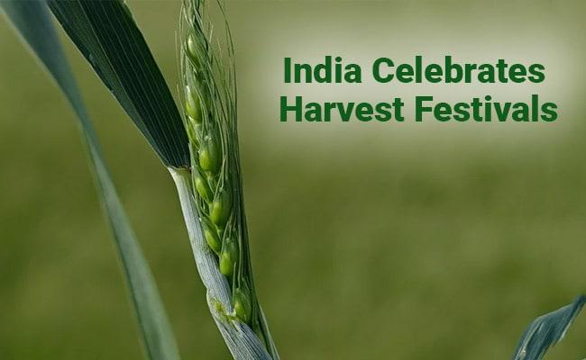 Pongal, Makar Sakranti, Lohri 2021: India Celebrates Its ...