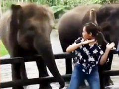 लड़की को डांस करते देख हाथी भी करने लगे डांस, IPS बोला- 'मुझसे भी अच्छा किया...' - देखें Video