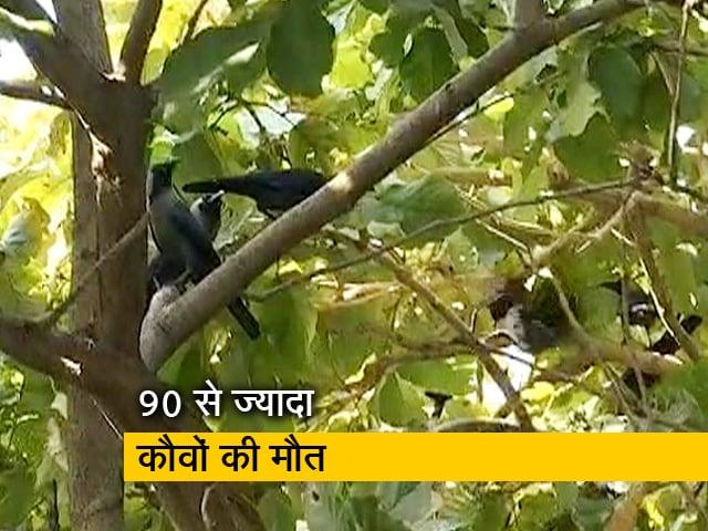 Videos : सिटी एक्सप्रेस: दिल्ली में बर्ड फ्लू से 27 बत्तखों और 90 से ज्यादा कौवों की मौत