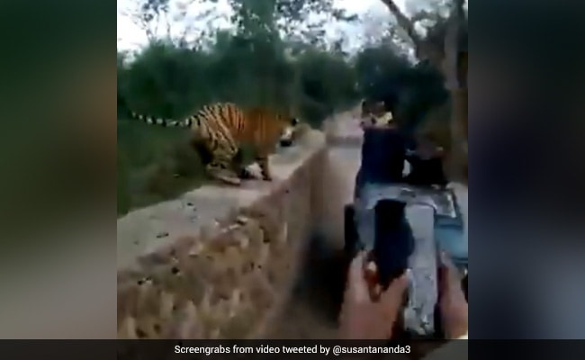 They Were Trying To Take Pics Of A Tiger. Watch What Happened Next