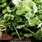 Why And How To Include Coriander In Your Diabetes Diet