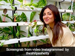 Shilpa Shetty's Salad Bowl Features Healthy Veggies From Her Backyard