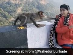 बंदर ने छीना खाना, महिला ने रोका तो जानवर ने ऐसे मारा झपट्टा - देखें Takatak Video