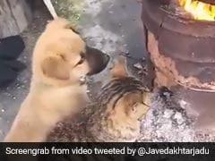 कुत्ता और बिल्ली एक-साथ भट्टी के पास बैठकर ले रहे थे गर्माहट, जावेद अख्तर ने शेयर किया मेजदार Viral Video