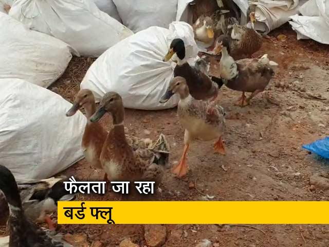Videos : देश-प्रदेश : भारत के 5 राज्यों में बर्ड फ्लू का प्रकोप, हिमाचल में भी दस्तक