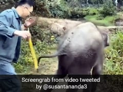 शख्स ने हाथी के बच्चे को खिलाया गन्ना, बदले में पड़ी जोरदार लात - देखें मजेदार Video