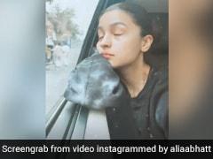 आलिया भट्ट सुबह के वक्त शूट पर जाते हुए कार में लेने लगी झपकी और फिर, देखें क्यूट सा Video