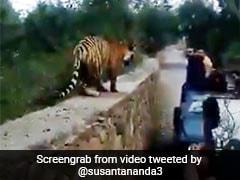 जंगल सफारी के दौरान बाघ की फोटो खींच रहे थे यात्री, पास आया जानवर और फिर... देखें Shocking Video