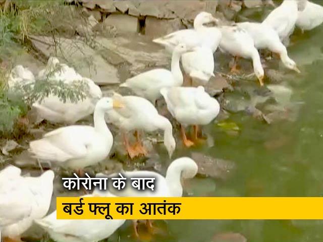 Videos : दिल्ली में भी बर्ड फ्लू की पुष्टि, अब तक 9 राज्य आए चपेट में