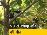 Video: सिटी एक्सप्रेस: दिल्ली में बर्ड फ्लू से 27 बत्तखों और 90 से ज्यादा कौवों की मौत