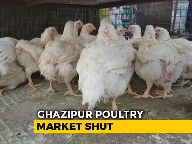 Video : Bird Flu: Sale Of Chicken Banned In Delhi
