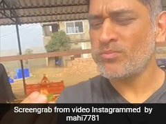 MS Dhoni Savours Fresh Strawberries From His Farm And It Looks Like Pure Bliss