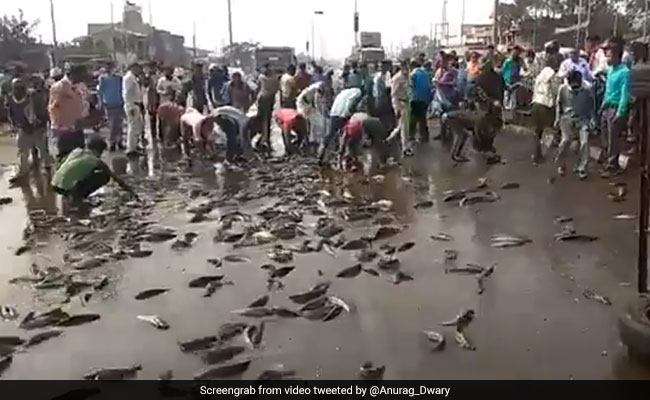 Watch: Fish Loot On A Busy Road After Vehicle Overturns