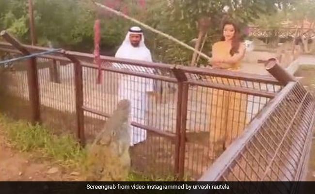 उर्वशी रौतेला ने मगरमच्छ को इस तरह खिलाया खाना, Video पोस्ट कर बोलीं- इनसे दूर रहना...