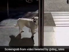 This Dog Waited 6 Days Outside Hospital For Owner To Return