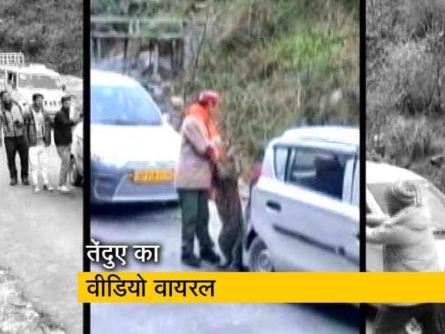 Videos : सड़क पर घूमता दिखा तेंदुआ, लोग बनाने लगे वीडियो