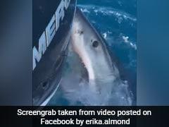 मछली पकड़ रहे थे दोस्त, नीचे से आई शार्क और जबड़े से पकड़ ली नाव और फिर... देखें Shocking Video