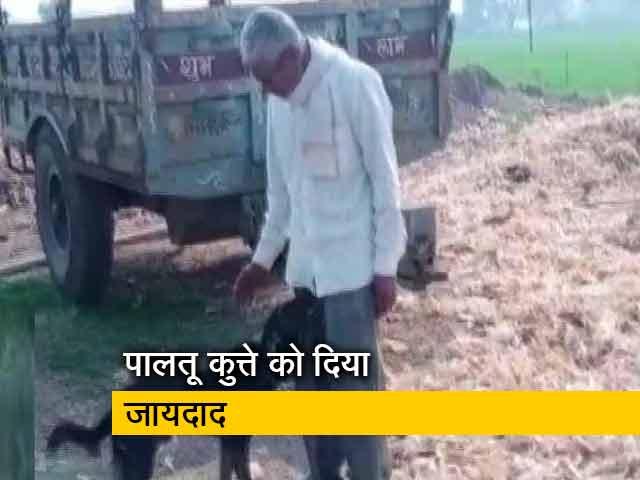 Video : बेटे से नाराज किसान ने पालतू कुत्ते के नाम किया जायदाद का हिस्सा