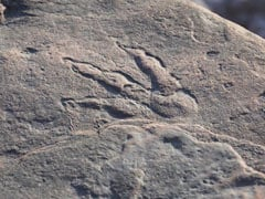 4-Year-Old Finds Well-Preserved Dinosaur Footprint On Beach