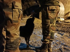 After Uttarakhand Flood Disaster, A Dog Waits For His Caretakers Outside Tunnel