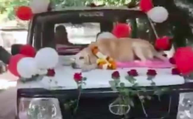 Warm Farewell For Sniffer Dog In Nashik After 11 Years Of Service. Watch