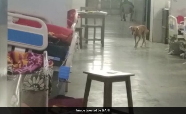 Video Of Dogs Inside Nagpur Hospital Goes Viral, Probe Ordered