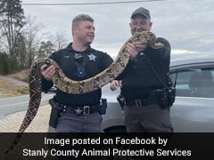 Boa Constrictor Slithers Out Of Container, Gets Stuck In Car Dashboard