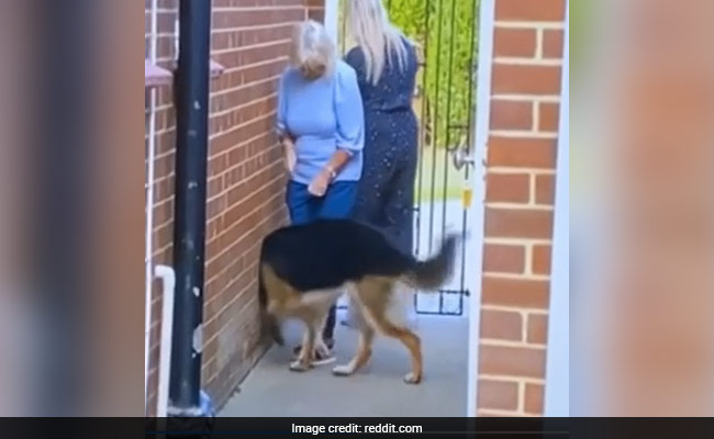 A Dog Walking Through A Wall And 5 Other Mind-Blowing Optical Illusions