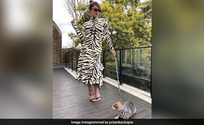 Priyanka Chopra And Adorable Pooch Diana In Next-Level White Tiger Twinning Pic