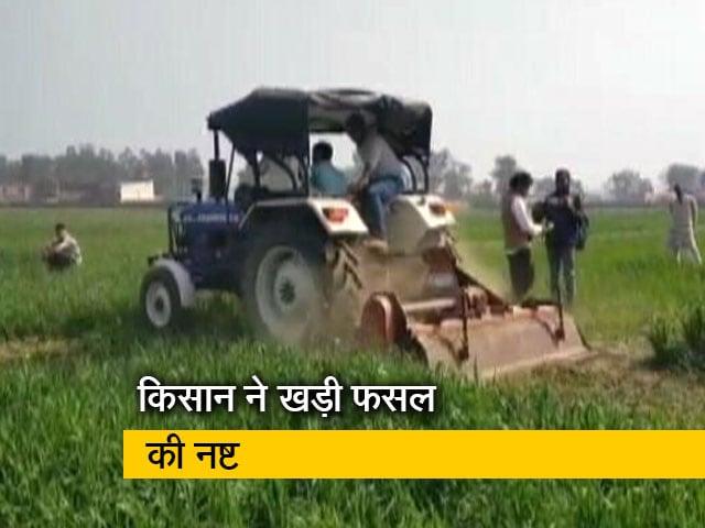 Videos : आंदोलन के समर्थन में हरियाणा के एक किसान ने 8 बीघा फसल को किया नष्ट