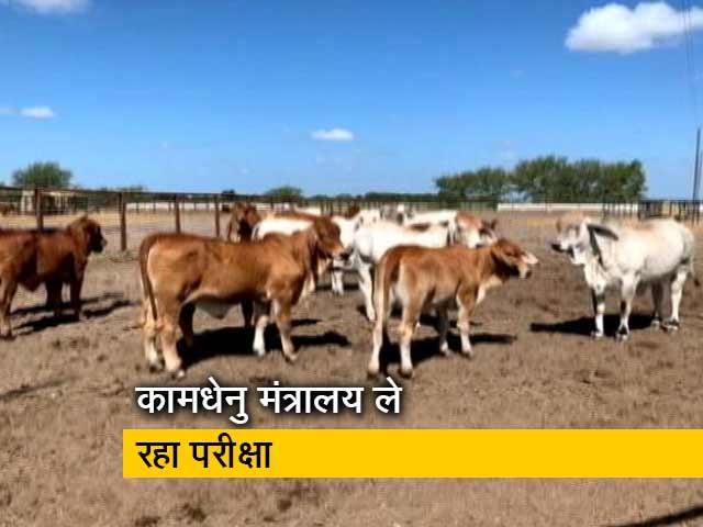 Videos : 25 फरवरी को 'पवित्र गाय' पर ऑनलाइन परीक्षा